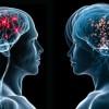 Los hombres tendrían un 16% más de neuronas que las mujeres