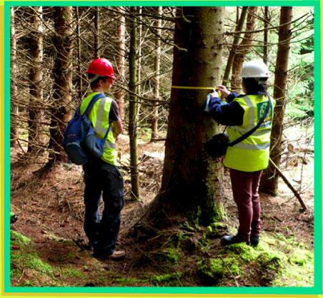 ingeniero-forestal